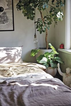The beginner's guide to indoor plants
