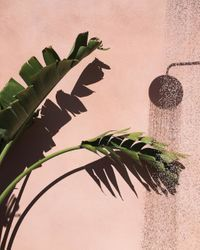 There's an Instagram account that exclusively posts plants against pink walls